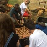 Selezione delle patate a I CRUSS